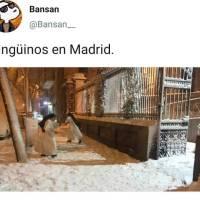 Pingüinos en Madrid